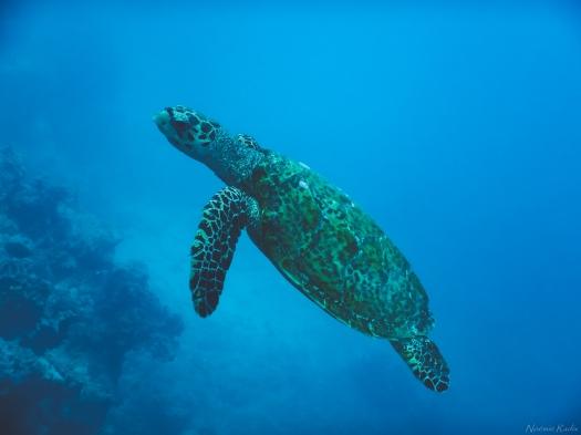 Tahiti-2766.jpg