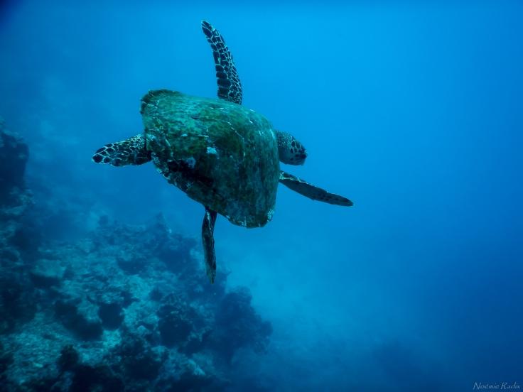 Tahiti-2767.jpg