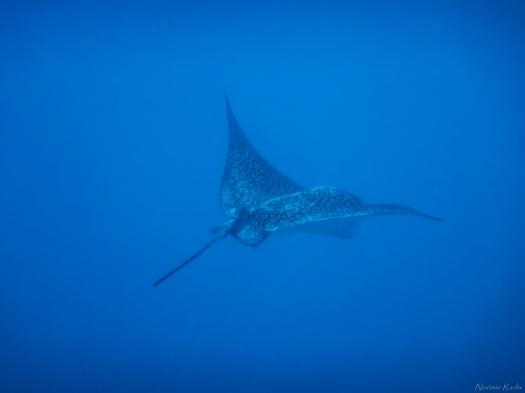 Tahiti-2790.jpg