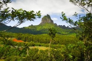 Tahiti-3328