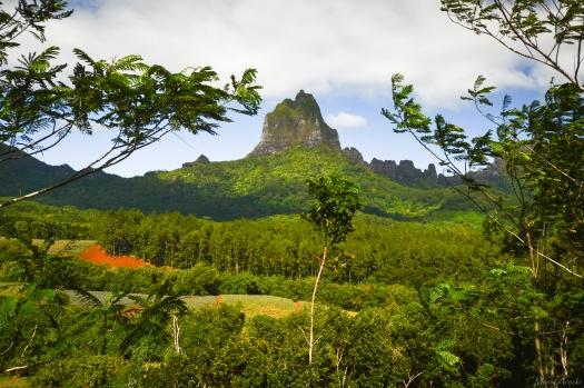 Tahiti-3328.jpg