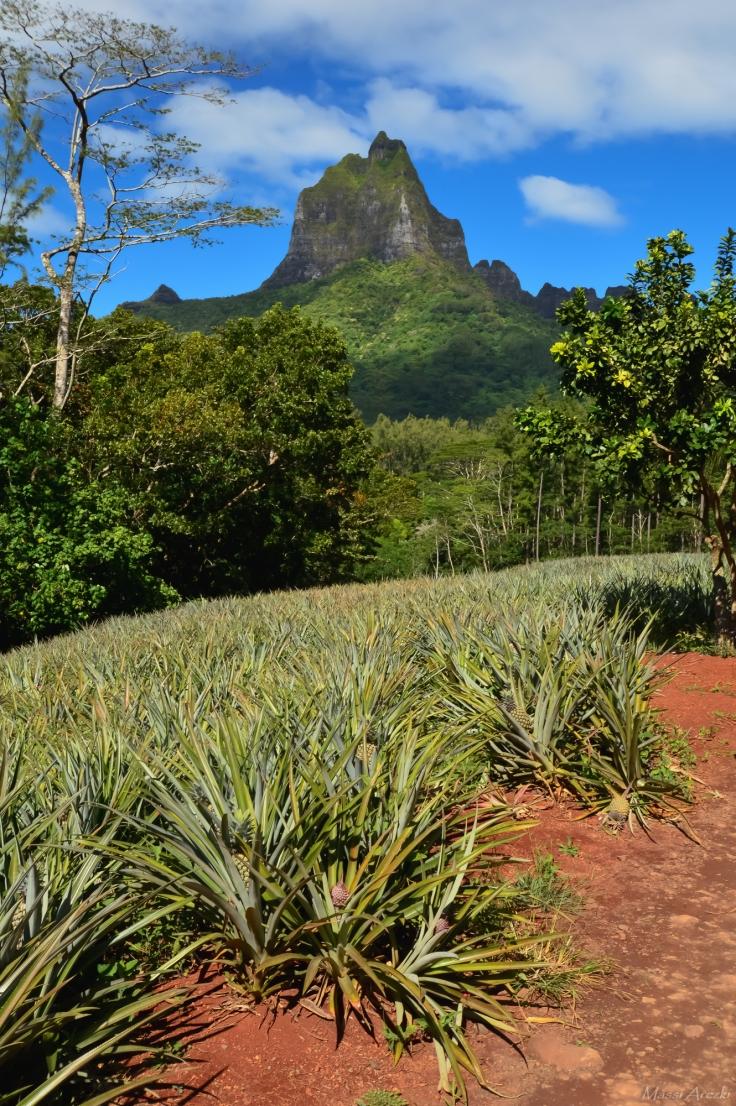 Tahiti-3352.jpg