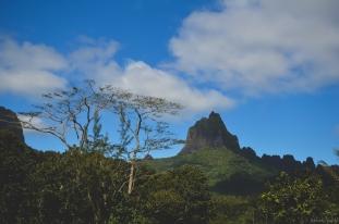 Tahiti-3356