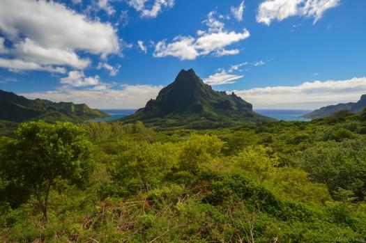Tahiti-3358.jpg