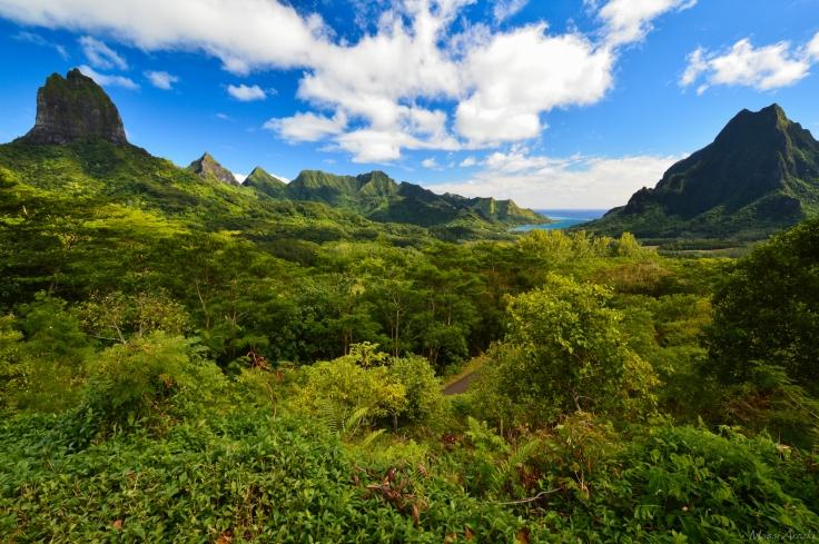 Tahiti-3360.jpg