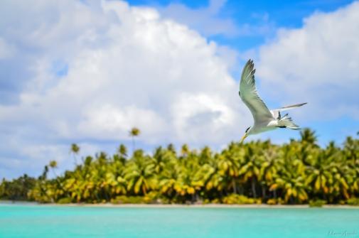 Mataiva, Polynésie Française